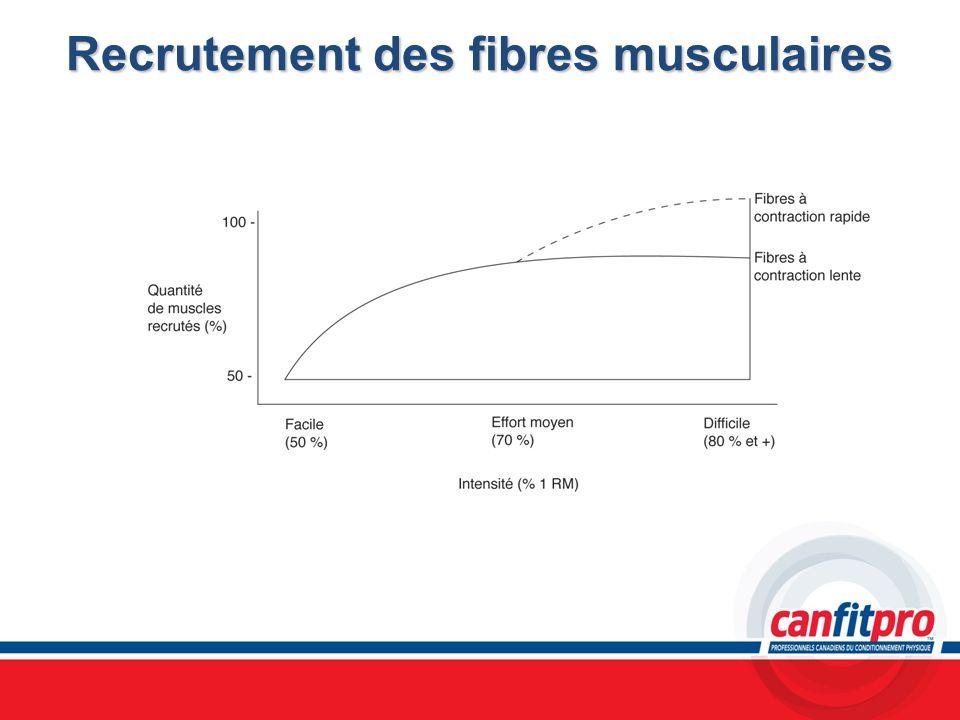 Recrutement des fibres musculaires