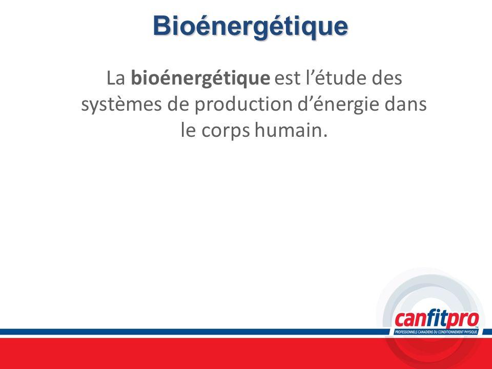 Bioénergétique La bioénergétique est létude des systèmes de production dénergie dans le corps humain.