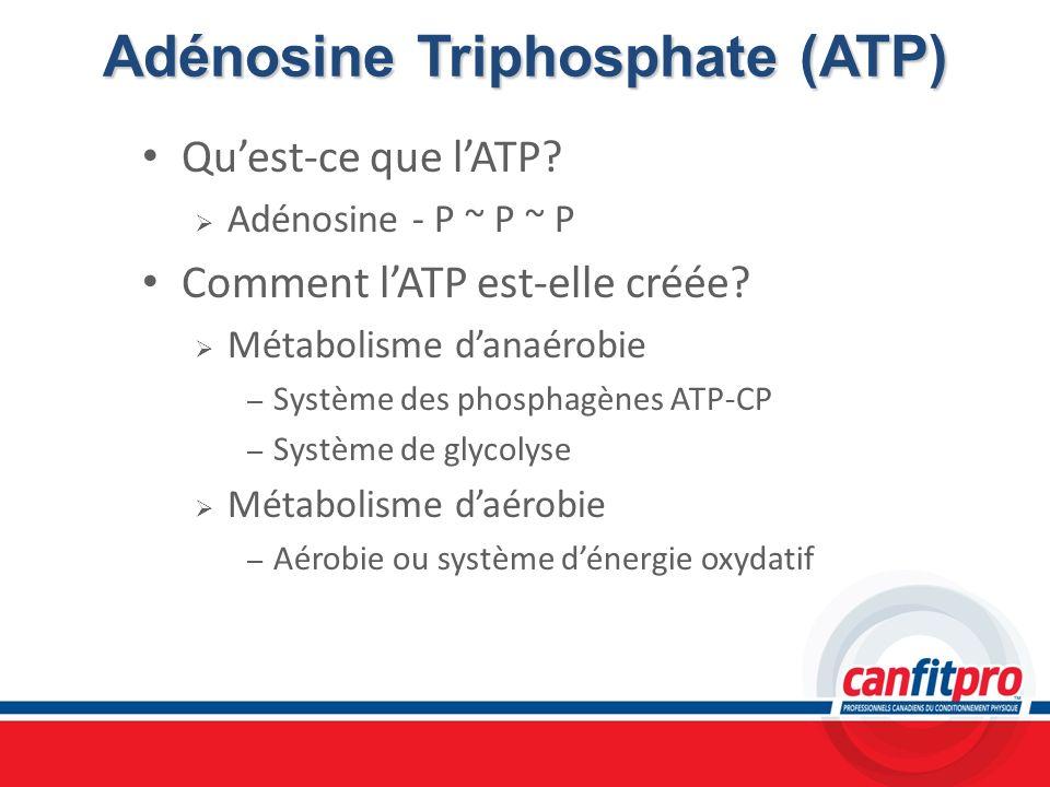 Adénosine Triphosphate (ATP) Quest-ce que lATP? Adénosine - P ~ P ~ P Comment lATP est-elle créée? Métabolisme danaérobie – Système des phosphagènes A