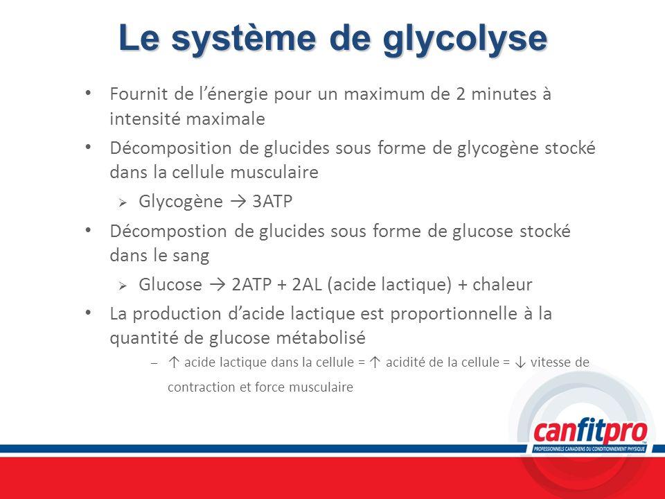 Le système de glycolyse Fournit de lénergie pour un maximum de 2 minutes à intensité maximale Décomposition de glucides sous forme de glycogène stocké