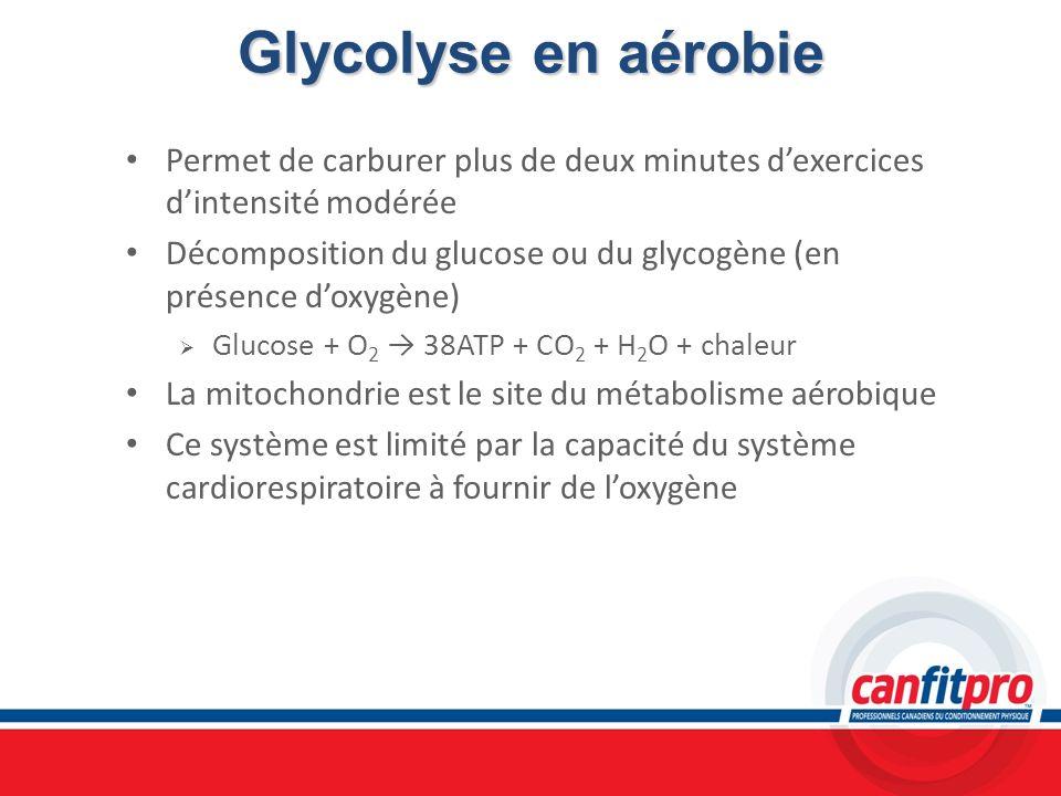 Glycolyse en aérobie Permet de carburer plus de deux minutes dexercices dintensité modérée Décomposition du glucose ou du glycogène (en présence doxyg