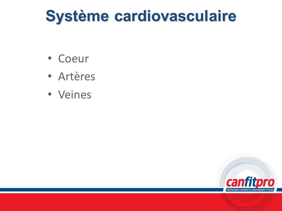 Système cardiovasculaire Coeur Artères Veines