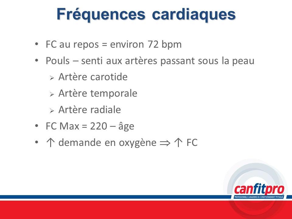 Fréquences cardiaques FC au repos = environ 72 bpm Pouls – senti aux artères passant sous la peau Artère carotide Artère temporale Artère radiale FC M