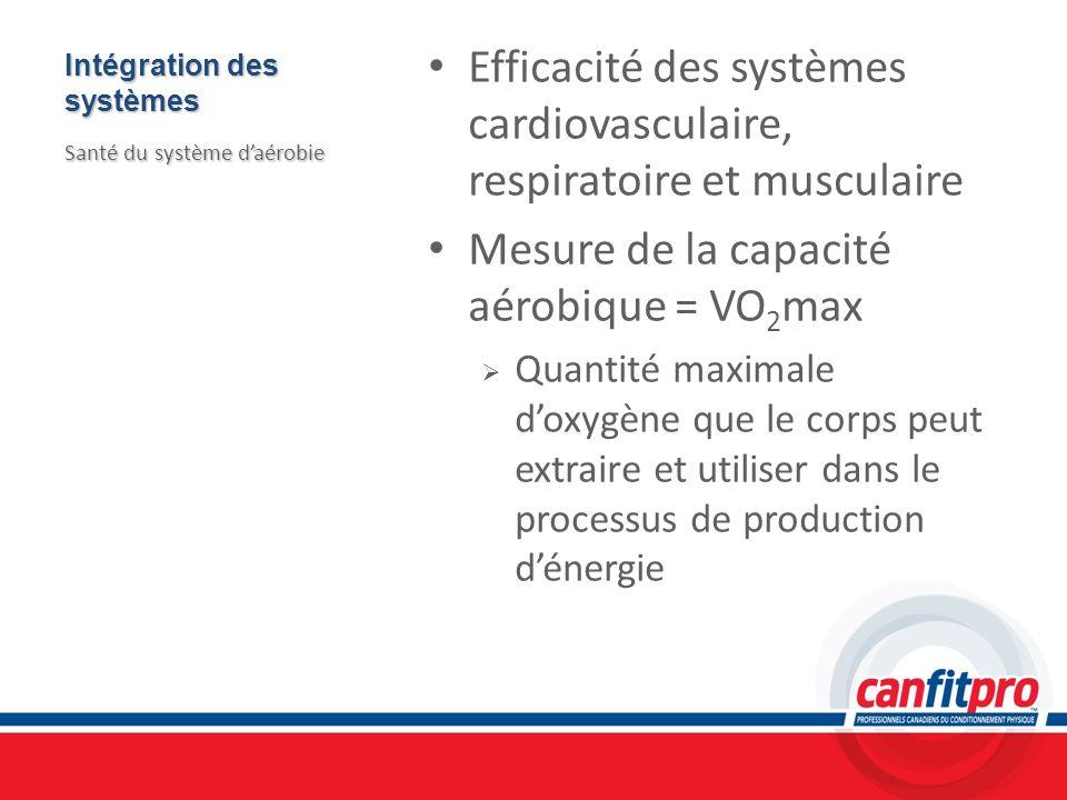 Intégration des systèmes Efficacité des systèmes cardiovasculaire, respiratoire et musculaire Mesure de la capacité aérobique = VO 2 max Quantité maxi