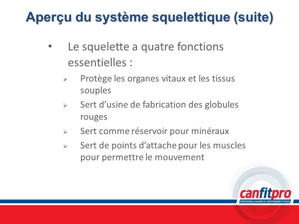 Aperçu du système squelettique (suite) Le squelette a quatre fonctions essentielles : Protège les organes vitaux et les tissus souples Sert dusine de
