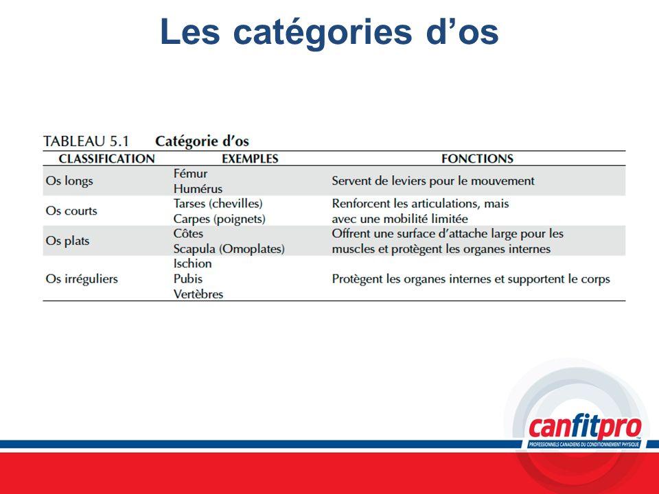 Les catégories dos