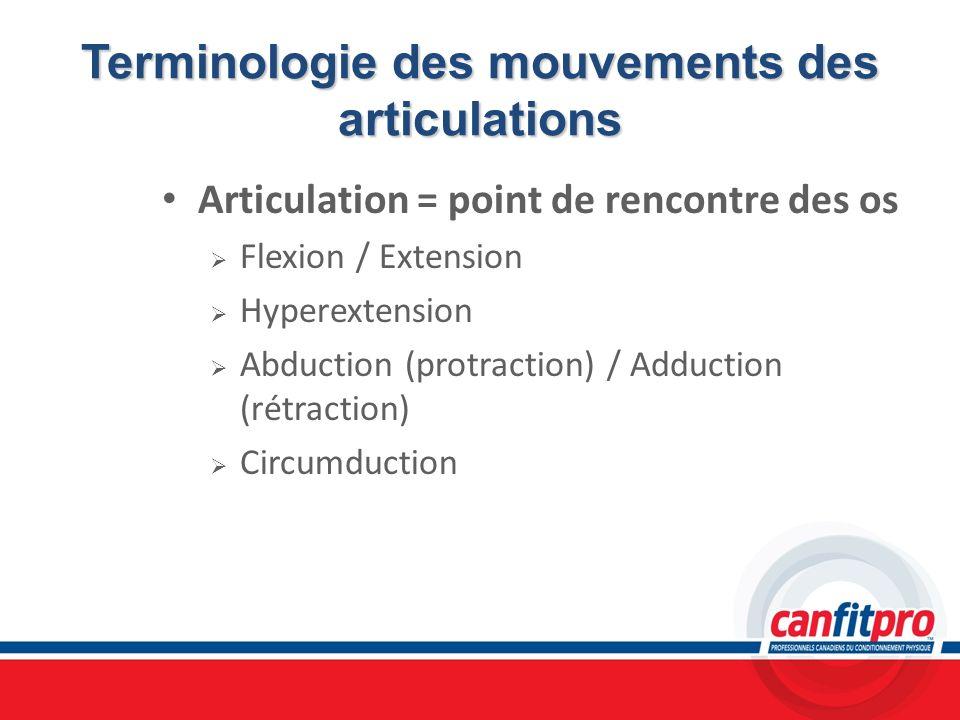 Terminologie des mouvements des articulations Articulation = point de rencontre des os Flexion / Extension Hyperextension Abduction (protraction) / Ad