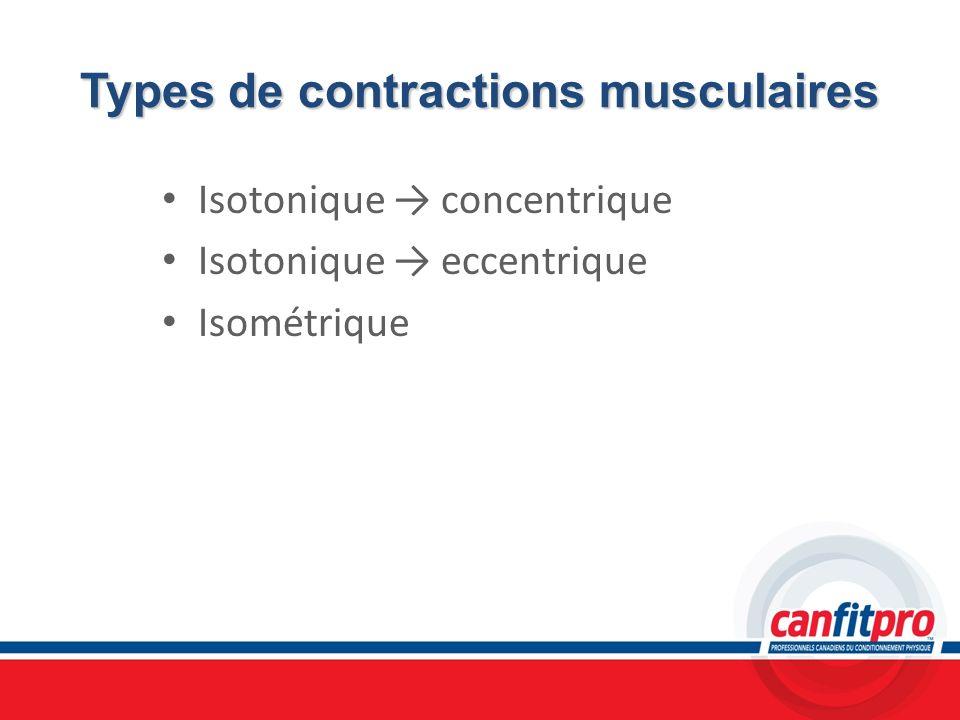 Types de contractions musculaires Isotonique concentrique Isotonique eccentrique Isométrique