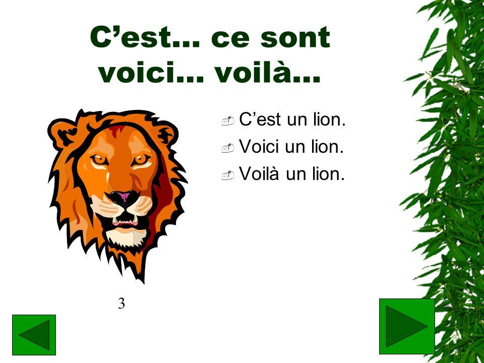 Cest… ce sont voici… voilà… Cest un lion. Voici un lion. Voilà un lion. 3
