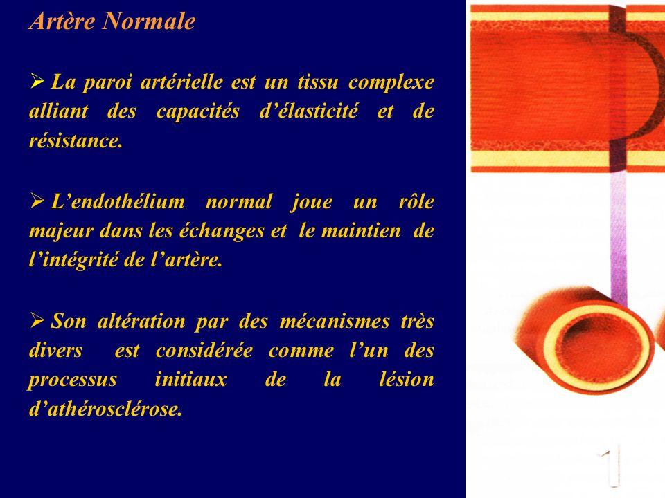 Artère Normale La paroi artérielle est un tissu complexe alliant des capacités délasticité et de résistance. Lendothélium normal joue un rôle majeur d