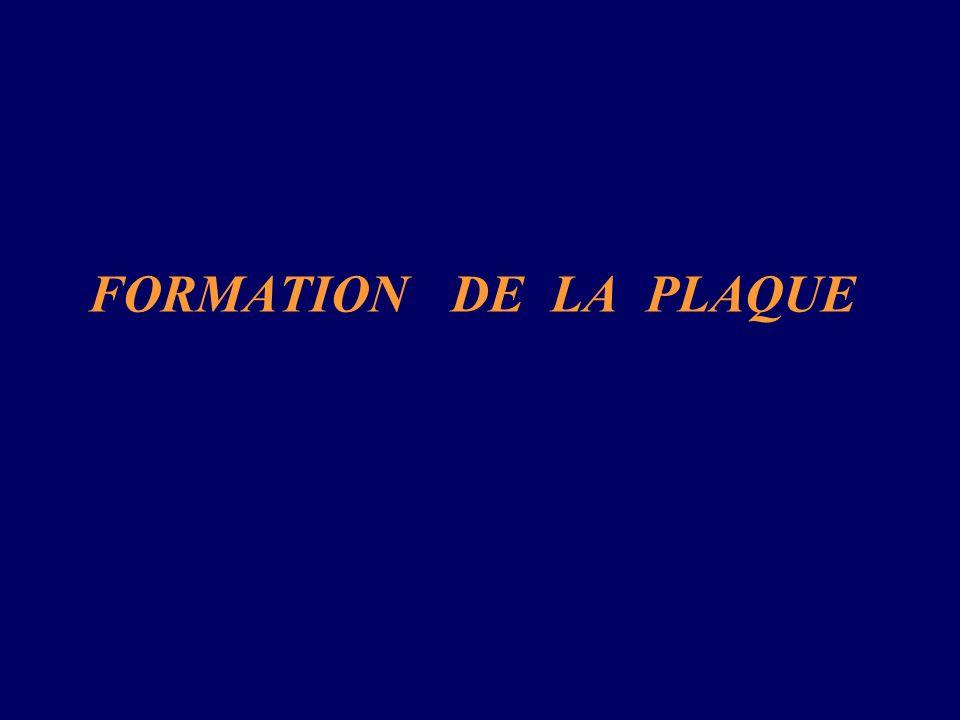 Première Phase : Accumulation des LDL-C: Étape indispensable à la formation de plaque.