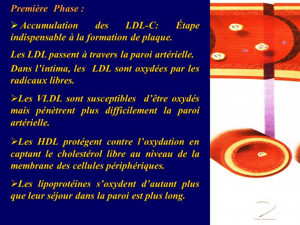 Première Phase : Accumulation des LDL-C: Étape indispensable à la formation de plaque. Accumulation des LDL-C: Étape indispensable à la formation de p