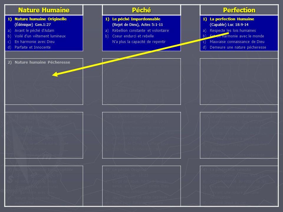 Nature Humaine PéchéPerfection 1)Nature humaine Originelle (Édénique) Gen.1:27 a)Avant le péché d'Adam b)Voilé d'un vêtement lumineux c)En harmonie av
