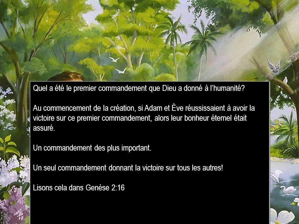 Quel a été le premier commandement que Dieu a donné à lhumanité? Au commencement de la création, si Adam et Ève réussissaient à avoir la victoire sur