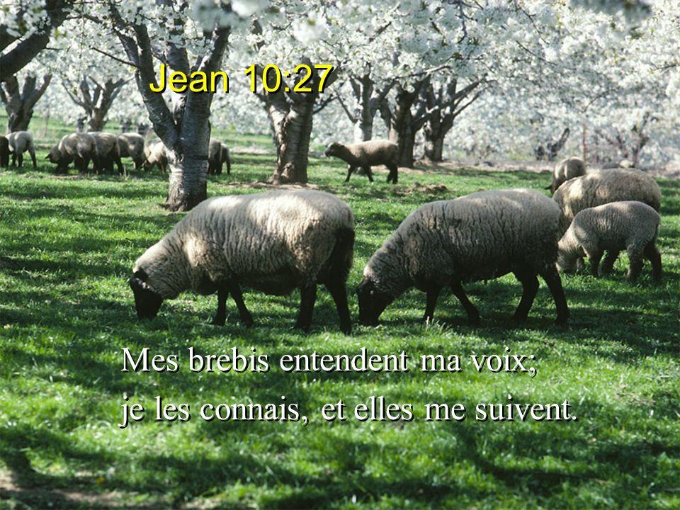 Mes brebis entendent ma voix; je les connais, et elles me suivent. Mes brebis entendent ma voix; je les connais, et elles me suivent. Jean 10:27