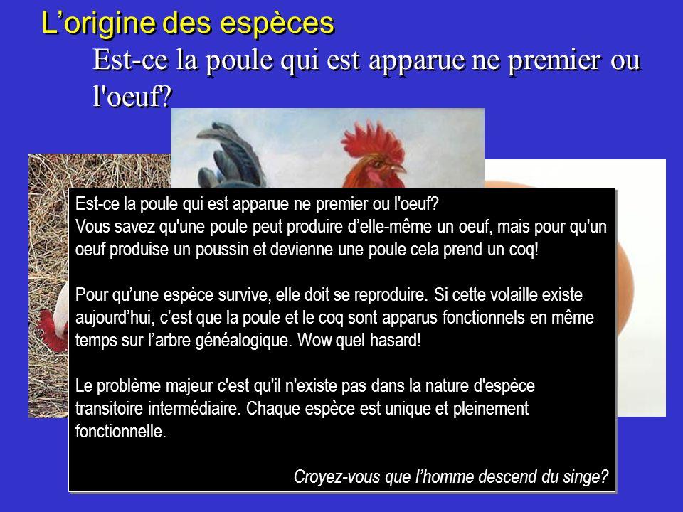 Lorigine des espèces Est-ce la poule qui est apparue ne premier ou l'oeuf? Lorigine des espèces Est-ce la poule qui est apparue ne premier ou l'oeuf?
