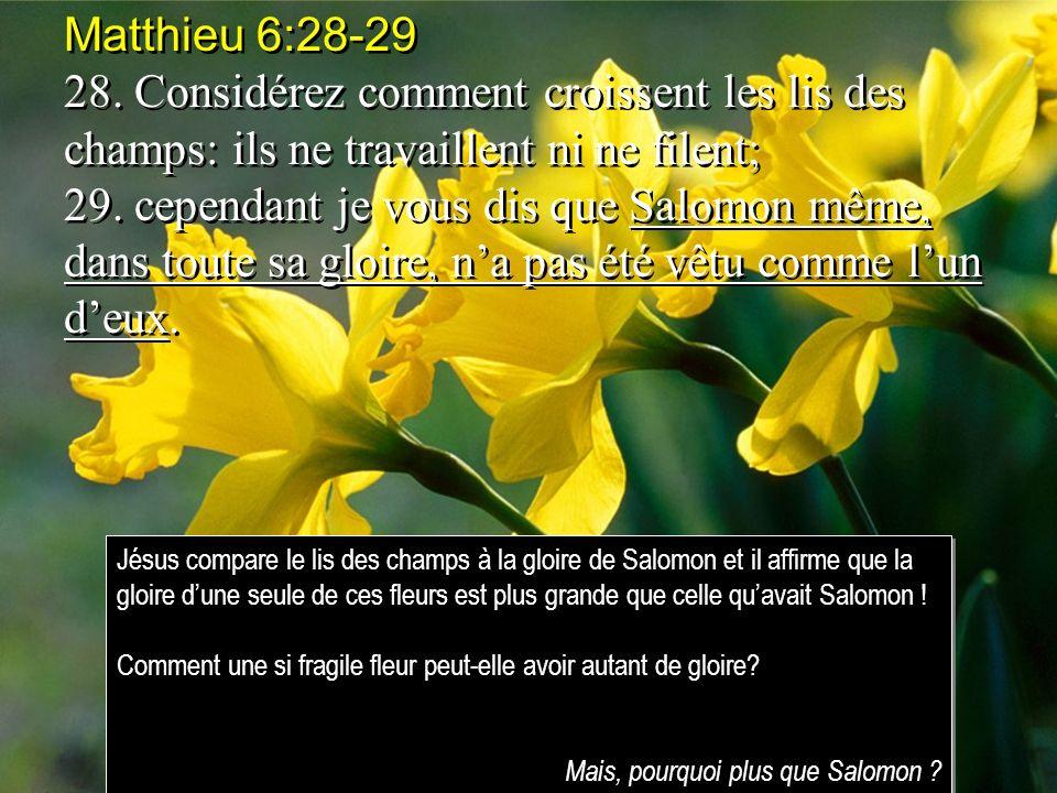 Matthieu 6:28-29 28. Considérez comment croissent les lis des champs: ils ne travaillent ni ne filent; 29. cependant je vous dis que Salomon même, dan