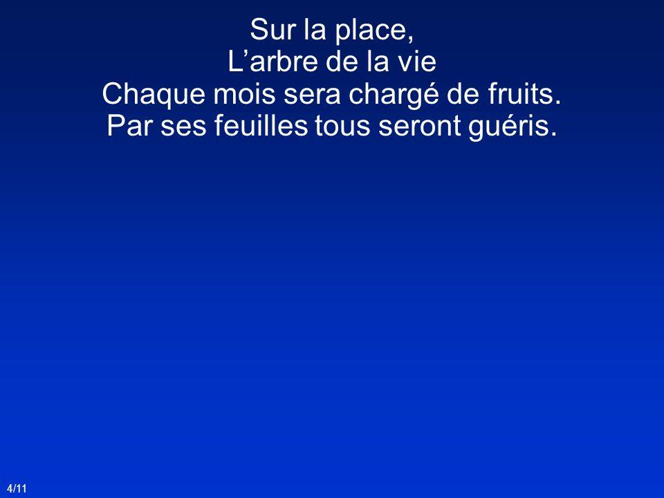 4/11 Sur la place, Larbre de la vie Chaque mois sera chargé de fruits.