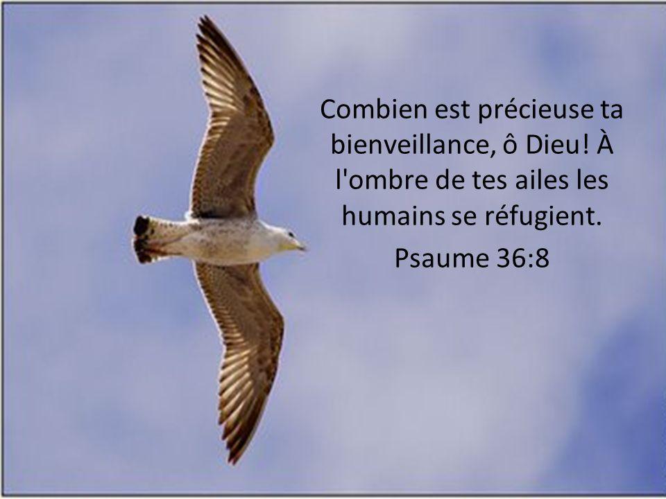 Combien est précieuse ta bienveillance, ô Dieu! À l'ombre de tes ailes les humains se réfugient. Psaume 36:8
