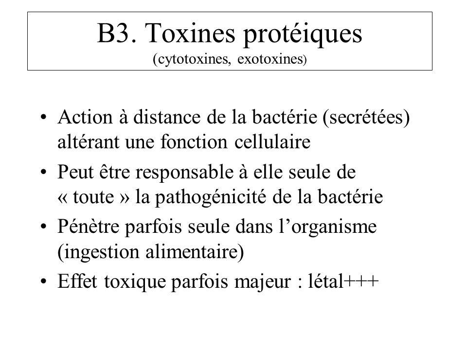 B3. Toxines protéiques (cytotoxines, exotoxines ) Action à distance de la bactérie (secrétées) altérant une fonction cellulaire Peut être responsable