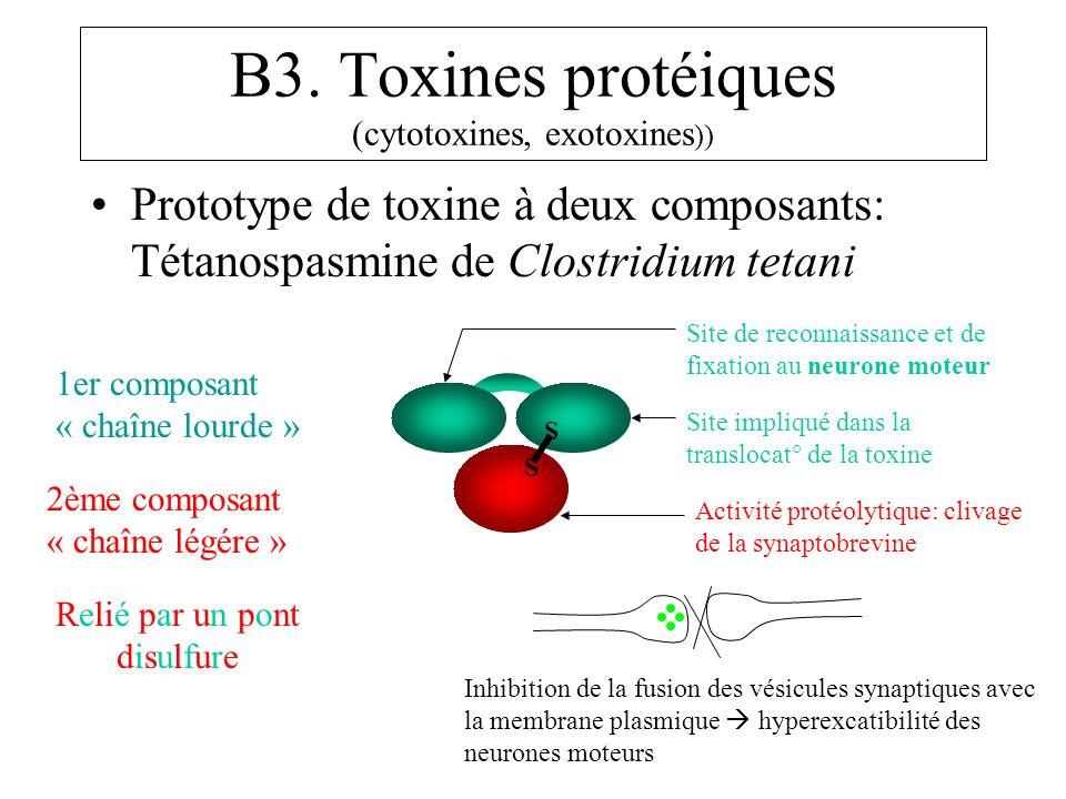 B3. Toxines protéiques (cytotoxines, exotoxines )) Prototype de toxine à deux composants: Tétanospasmine de Clostridium tetani S S 1er composant « cha