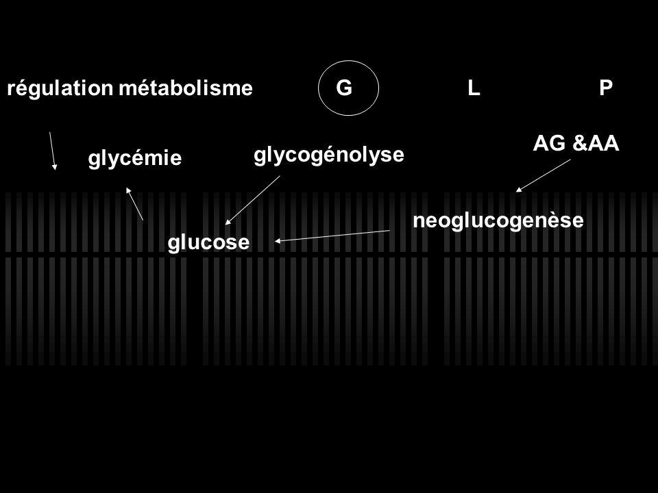 régulation métabolisme GLP glycémie glucose AG &AA neoglucogenèse glycogénolyse