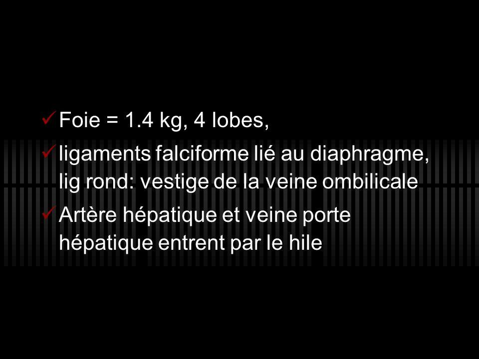 Foie = 1.4 kg, 4 lobes, ligaments falciforme lié au diaphragme, lig rond: vestige de la veine ombilicale Artère hépatique et veine porte hépatique ent