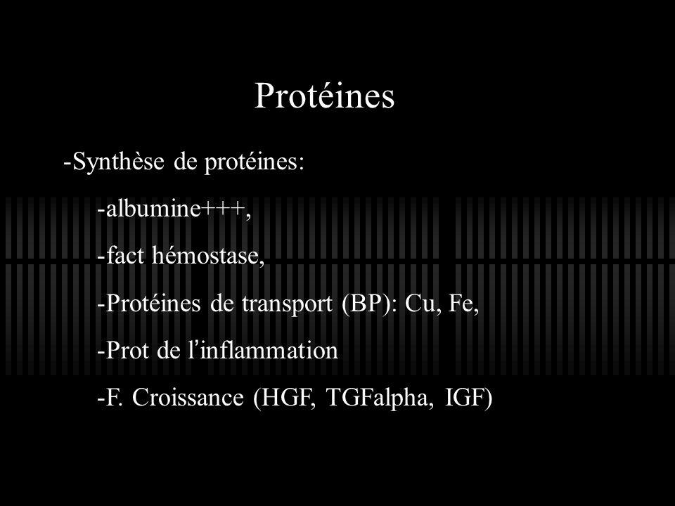 Protéines -Synthèse de protéines: -albumine+++, -fact hémostase, -Protéines de transport (BP): Cu, Fe, -Prot de linflammation -F. Croissance (HGF, TGF