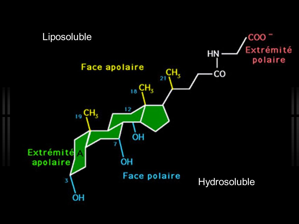 Hydrosoluble Liposoluble
