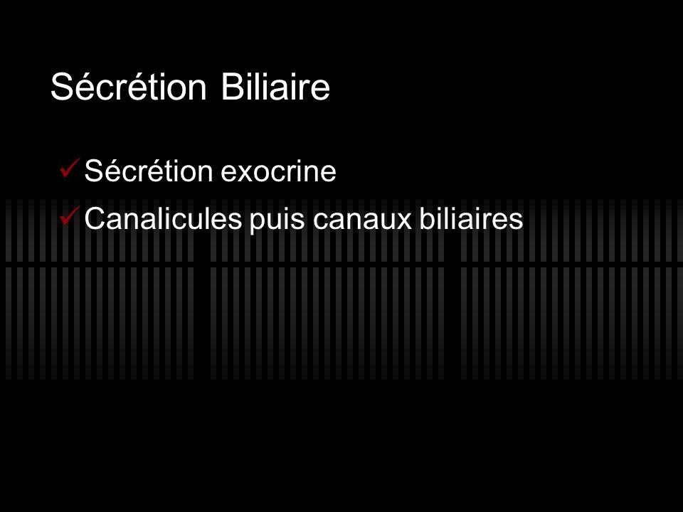 Sécrétion Biliaire Sécrétion exocrine Canalicules puis canaux biliaires
