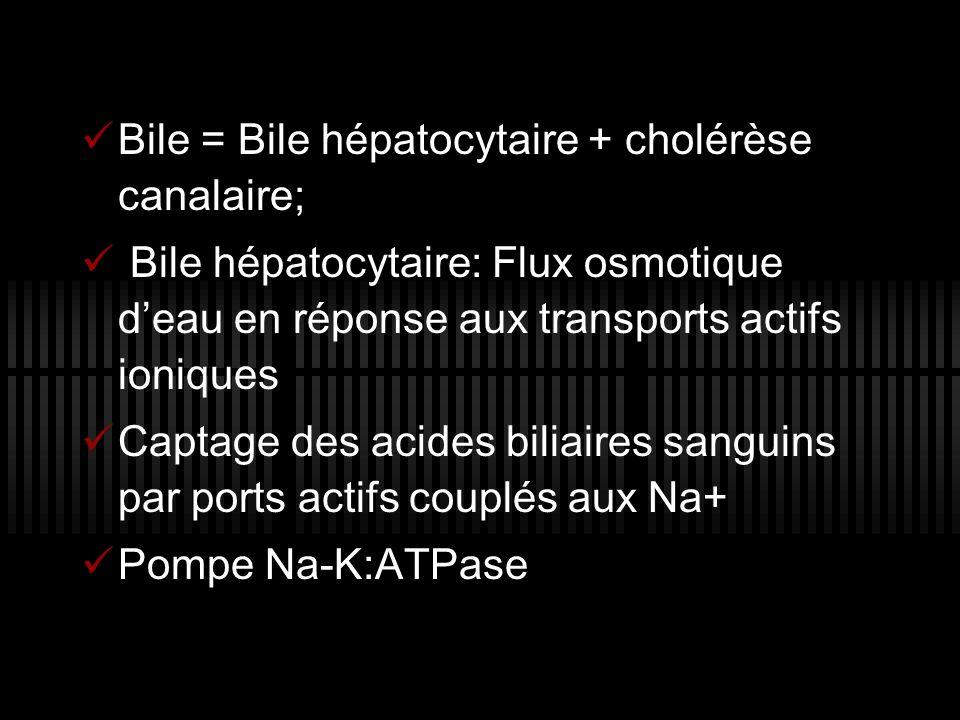 Bile = Bile hépatocytaire + cholérèse canalaire; Bile hépatocytaire: Flux osmotique d eau en réponse aux transports actifs ioniques Captage des acides