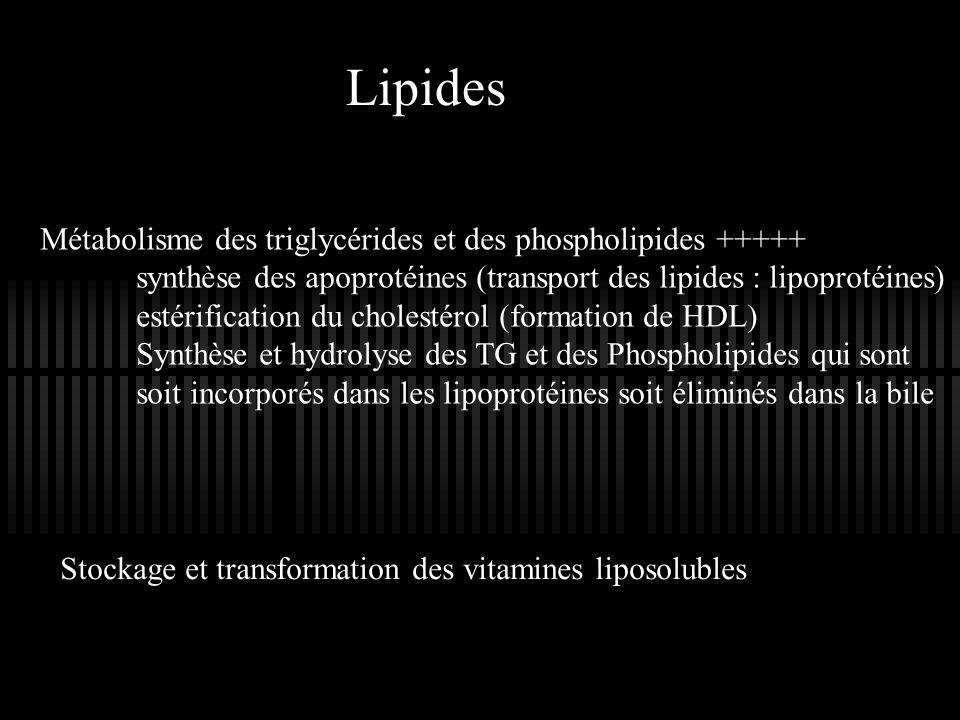 Lipides Métabolisme des triglycérides et des phospholipides +++++ synthèse des apoprotéines (transport des lipides : lipoprotéines) estérification du