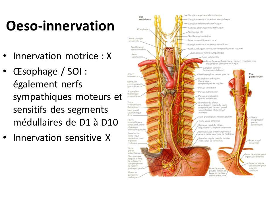 Oeso-innervation Innervation motrice : X Œsophage / SOI : également nerfs sympathiques moteurs et sensitifs des segments médullaires de D1 à D10 Inner