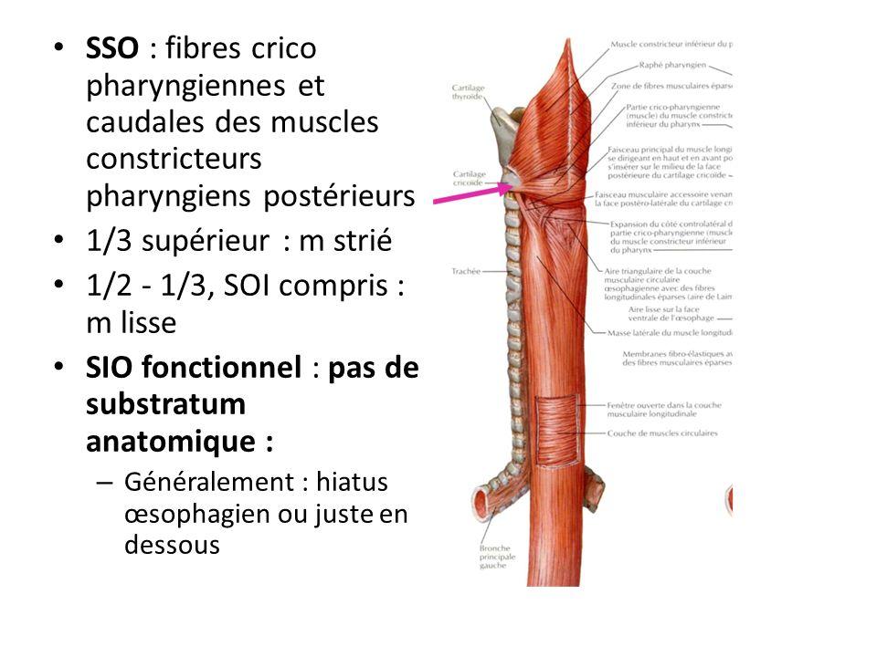 SSO : fibres crico pharyngiennes et caudales des muscles constricteurs pharyngiens postérieurs 1/3 supérieur : m strié 1/2 - 1/3, SOI compris : m liss
