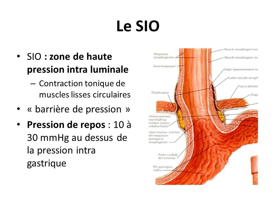 Le SIO SIO : zone de haute pression intra luminale – Contraction tonique de muscles lisses circulaires « barrière de pression » Pression de repos : 10