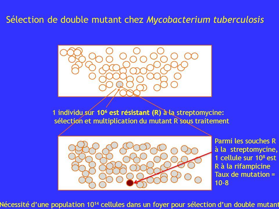 1 individu sur 10 6 est résistant (R) à la streptomycine: sélection et multiplication du mutant R sous traitement Sélection de double mutant chez Myco