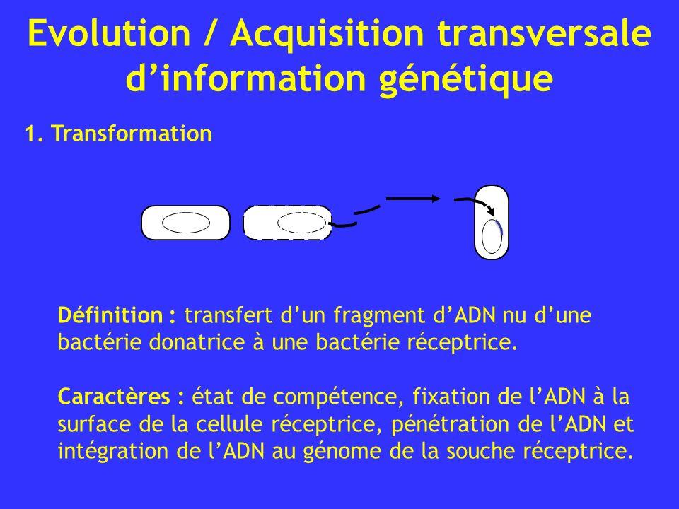 Evolution / Acquisition transversale dinformation génétique Définition : transfert dun fragment dADN nu dune bactérie donatrice à une bactérie réceptr