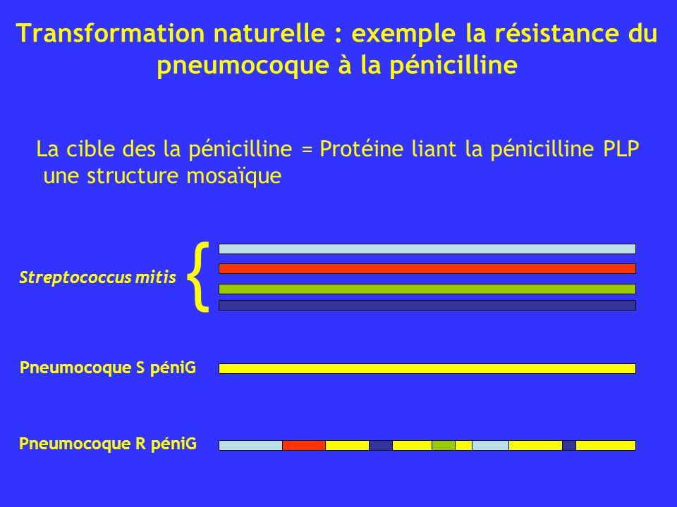 Transformation naturelle : exemple la résistance du pneumocoque à la pénicilline { Streptococcus mitis La cible des la pénicilline = Protéine liant la