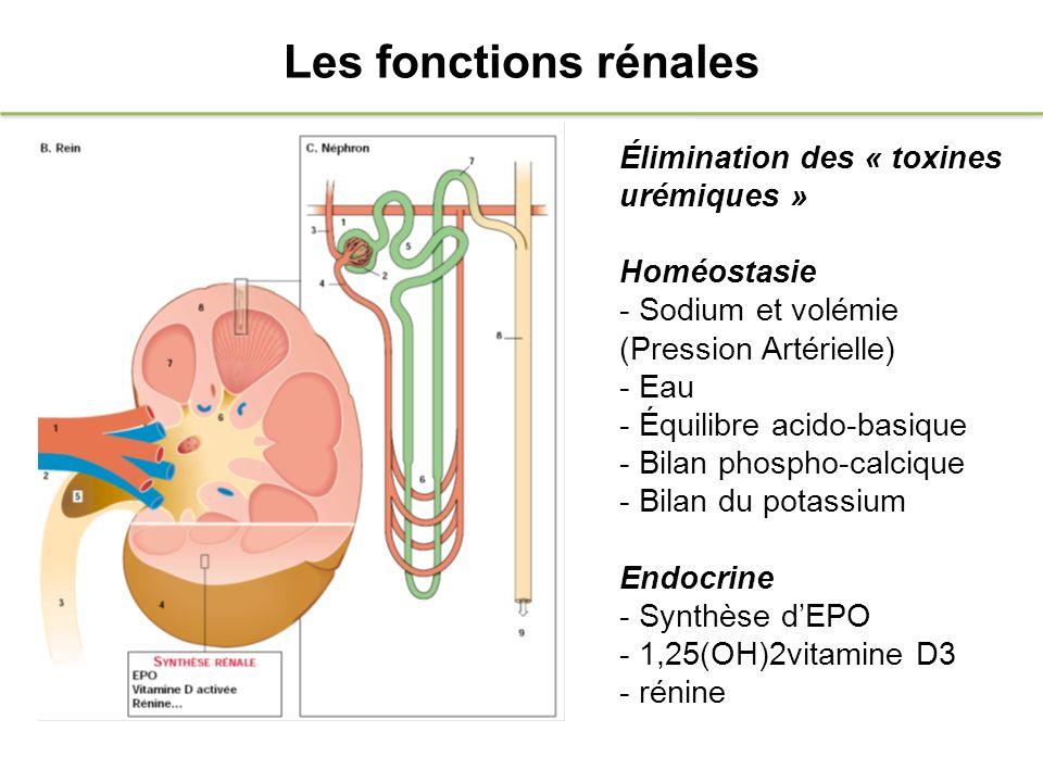 Néphrite Interstitielle Chronique Atteinte prédominante du tissu de soutien rénal interstitiel, et très souvent des tubes adjacents.