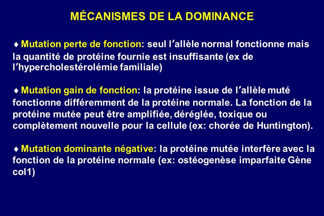 MÉCANISMES DE LA DOMINANCE Mutation perte de fonction: seul lallèle normal fonctionne mais la quantité de protéine fournie est insuffisante (ex de lhypercholestérolémie familiale) Mutation gain de fonction: la protéine issue de lallèle muté fonctionne différemment de la protéine normale.