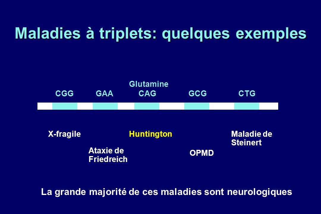 Maladies à triplets: quelques exemples CGGGCGCAGGAACTG X-fragile Ataxie de Friedreich Huntington OPMD Maladie de Steinert Glutamine La grande majorité