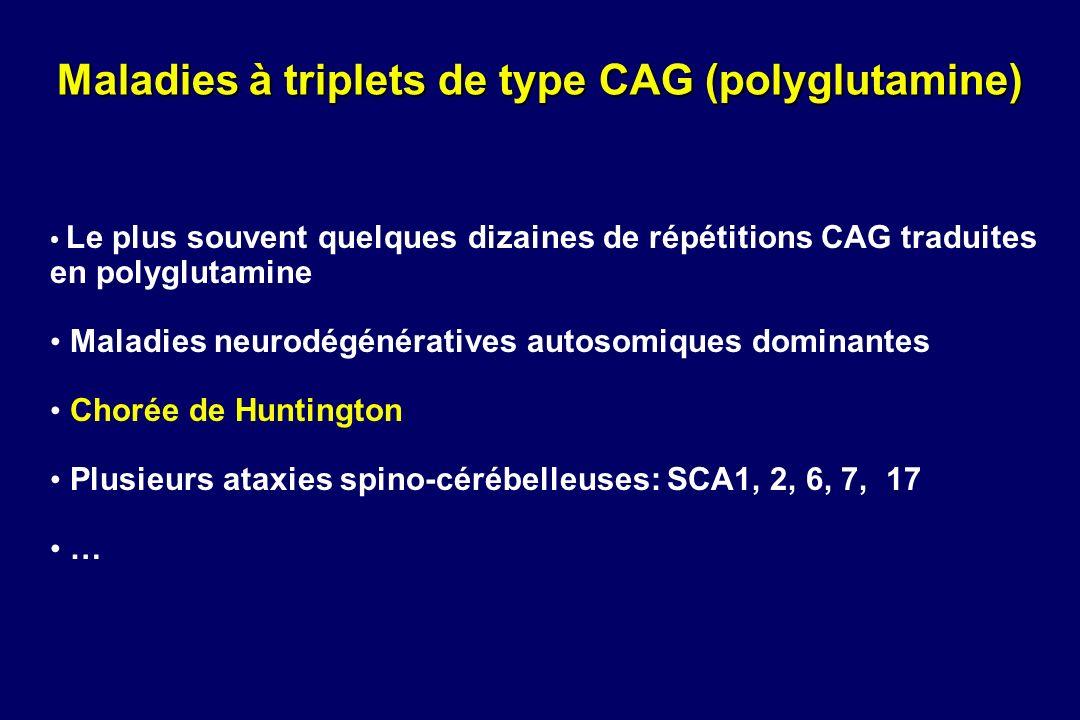 Maladies à triplets de type CAG (polyglutamine) Le plus souvent quelques dizaines de répétitions CAG traduites en polyglutamine Maladies neurodégénéra