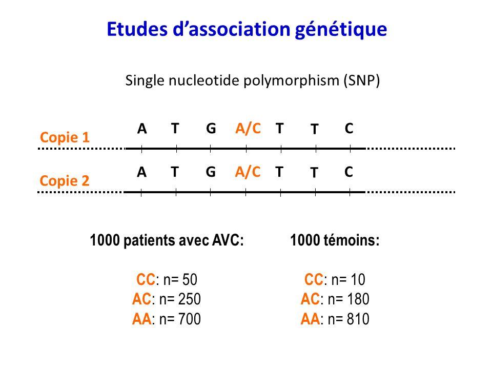 A A/CTGT T C Copie 1 A A/CTGT T C Copie 2 1000 témoins: CC : n= 10 AC : n= 180 AA : n= 810 1000 patients avec AVC: CC : n= 50 AC : n= 250 AA : n= 700