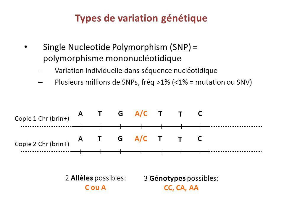 Types de variation génétique Single Nucleotide Polymorphism (SNP) = polymorphisme mononucléotidique – Variation individuelle dans séquence nucléotidiq