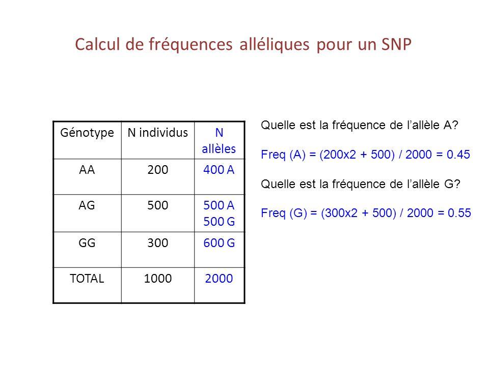 Calcul de fréquences alléliques pour un SNP GénotypeN individusN allèles AA200400 A AG500500 A 500 G GG300600 G TOTAL10002000 Quelle est la fréquence