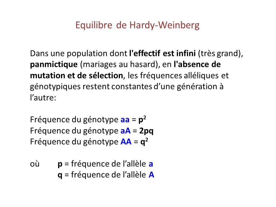 Equilibre de Hardy-Weinberg Dans une population dont l'effectif est infini (très grand), panmictique (mariages au hasard), en l'absence de mutation et