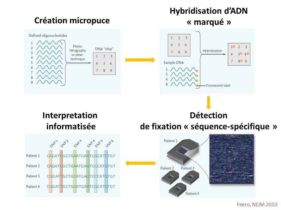 Feero, NEJM 2010 Création micropuce Hybridisation dADN « marqué » Détection de fixation « séquence-spécifique » Interpretation informatisée