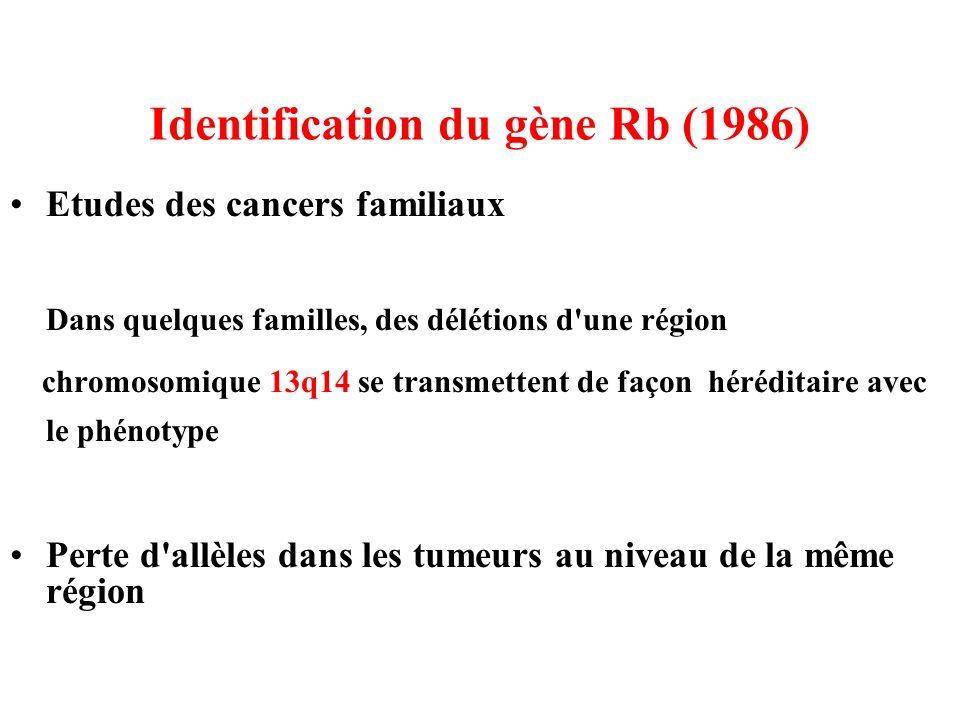 Identification du gène Rb (1986) Etudes des cancers familiaux Dans quelques familles, des délétions d'une région chromosomique 13q14 se transmettent d