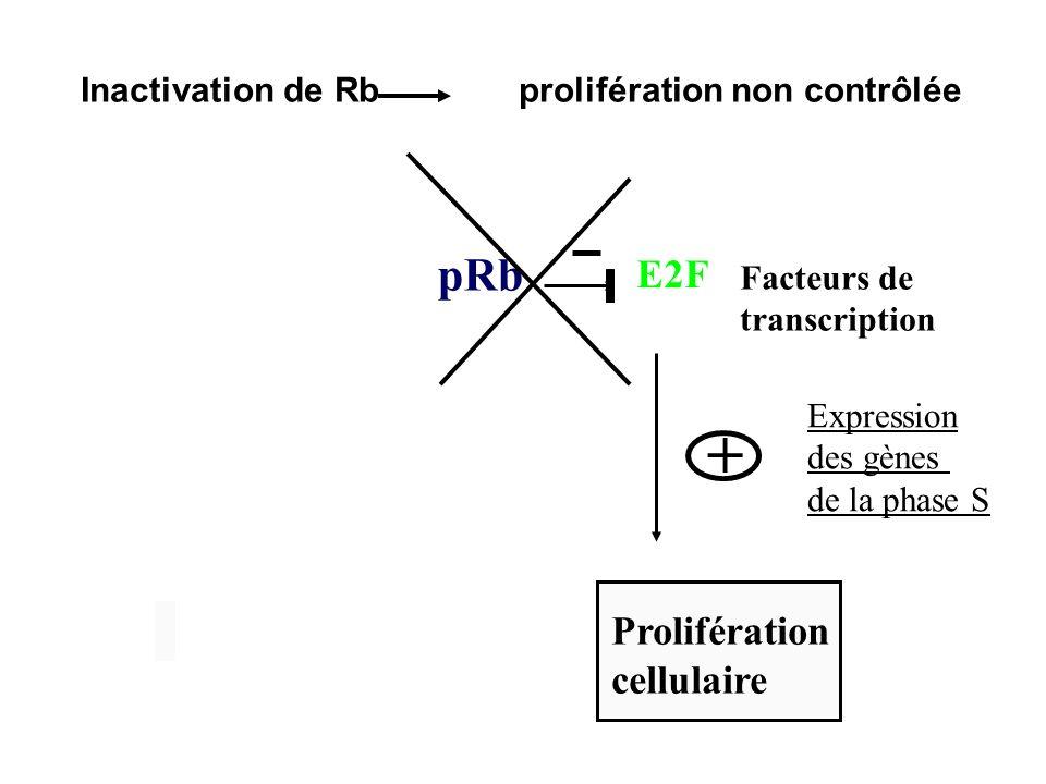 Transmission héréditaire Mutation somatique Sporadique Premier mutation somatique Deuxième mutation somatique Mutation germinale transmise
