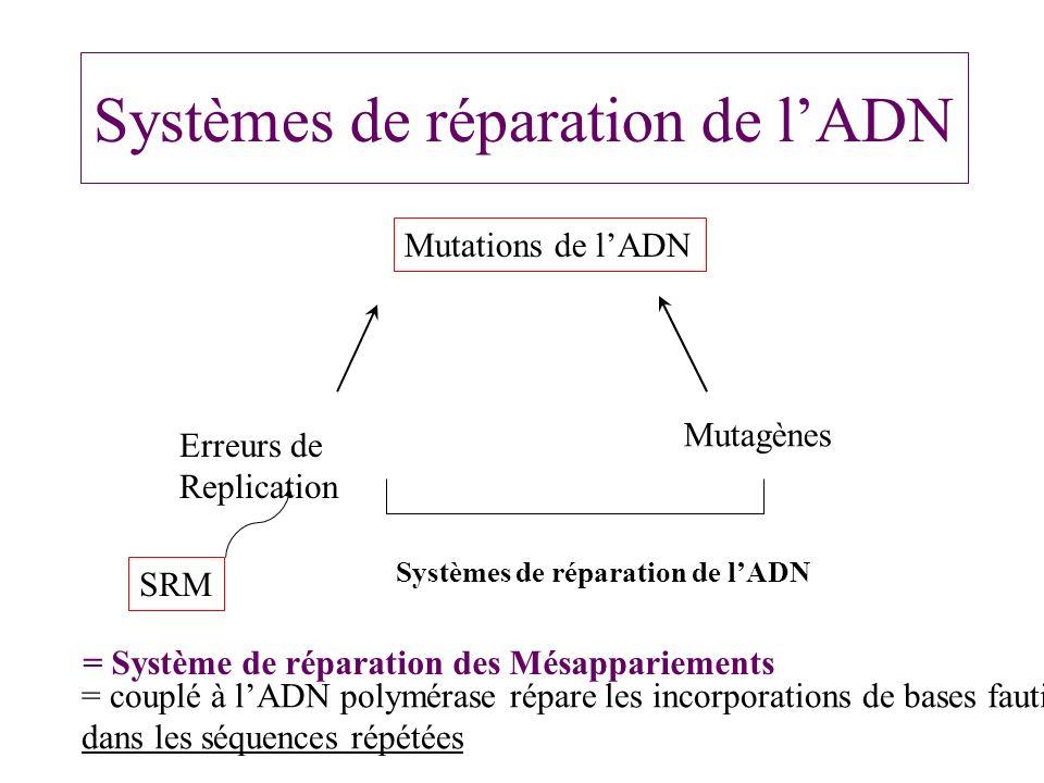SRM suite - Complexe multiprotéique hMSH2, hMLH1, PMS1, PMS2, hMSH6 - Altération du SRM: Taux de mutations dans la Cellule tumorale Vitesse daccumulation taux mutations dans oncogènes et gènes suppresseurs - SRM +/- pas daltération de la réparation - SRM -/- Instabilité des séquences microsatellites, accumulation mutations ponctuelles dans les gènes